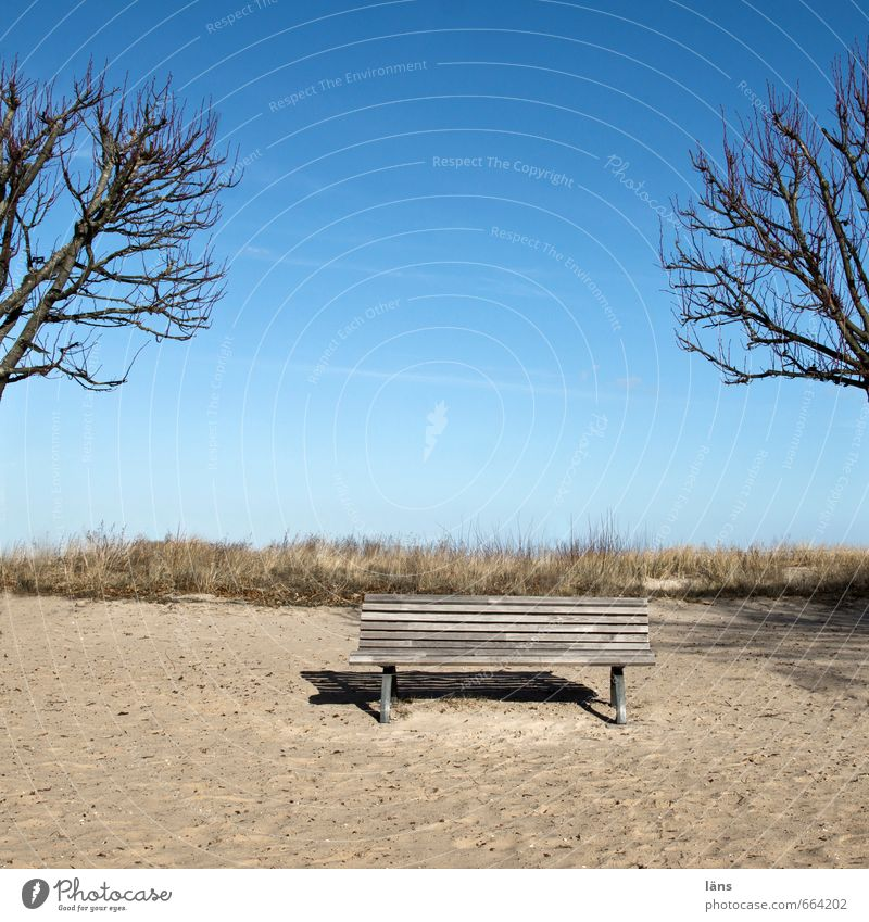 Sky Nature Tree Relaxation Landscape Winter Beach Environment Coast Sand Contentment Sit Island Beautiful weather Beginning To enjoy