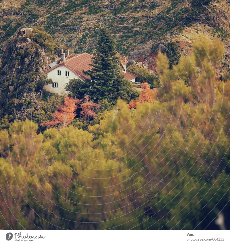 Nature Green Plant Tree House (Residential Structure) Yellow Mountain Autumn Rock Bushes Hut Alpine hut