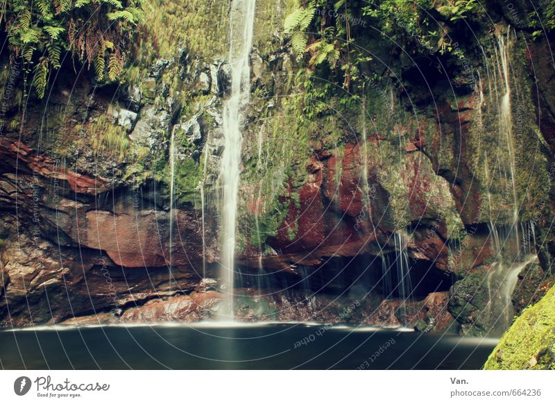 damp cellar Nature Plant Water Autumn Moss Fern Rock Pond Waterfall Fresh Wet Green Colour photo Multicoloured Exterior shot Deserted Day Contrast Long exposure