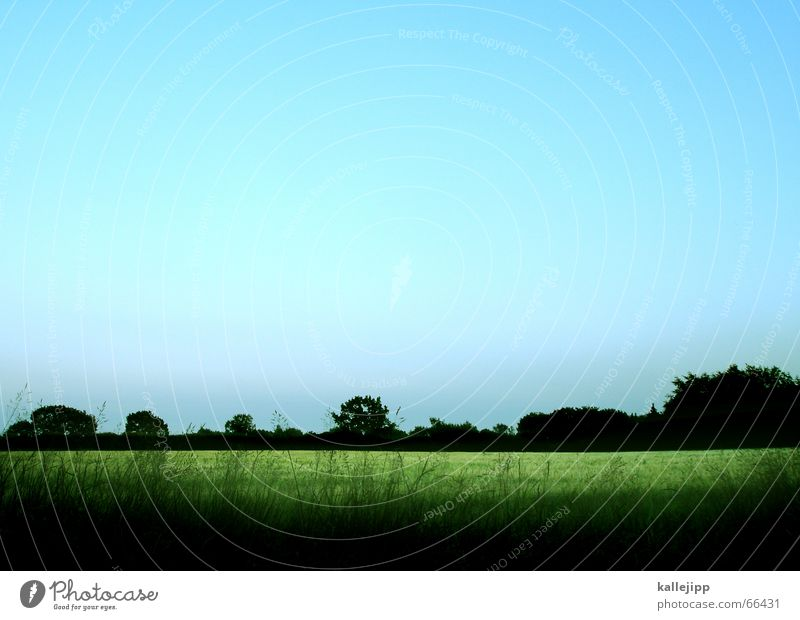 uncharted territory Wheat Field Green Nature Landscape Evening Sky Blue weseby kallejipp