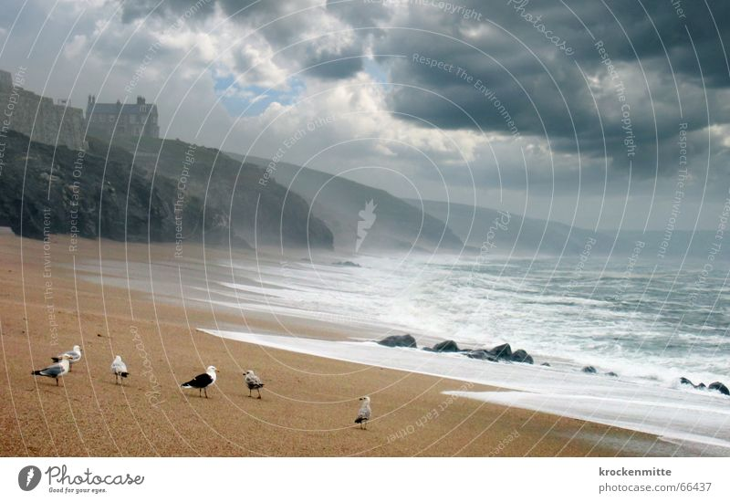 Water Ocean Beach House (Residential Structure) Clouds Dark Mountain Bird Rain Waves Coast Weather Gale Passion Seagull England