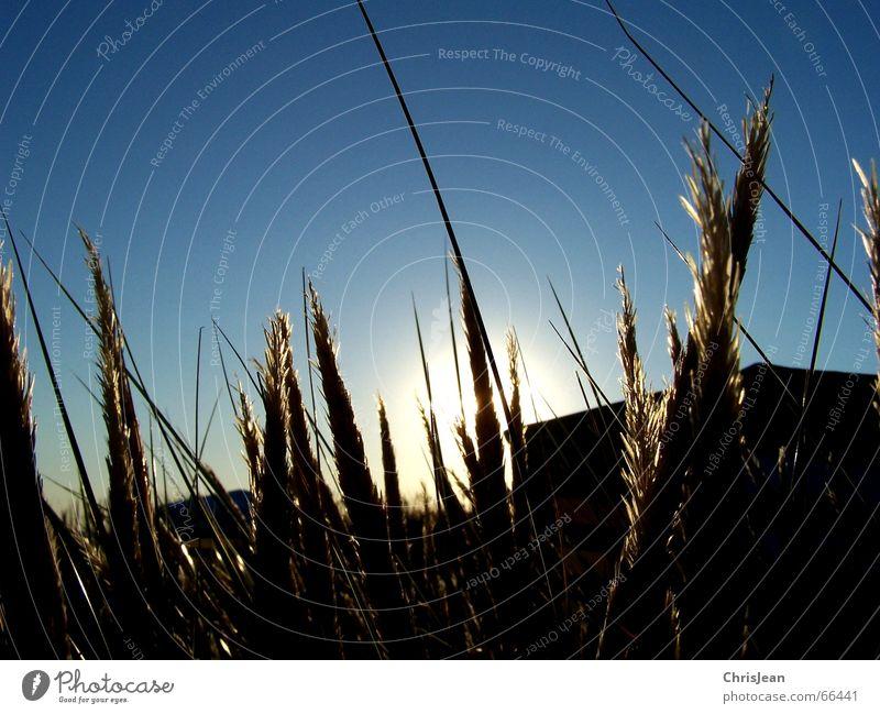 Sun Blue Beach Calm Loneliness Relaxation Meadow Grass Contentment Island Blade of grass Tent Borkum Beach tent