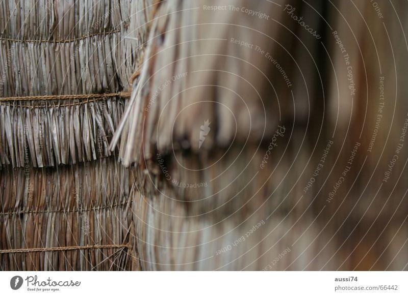 Line Fence Straw