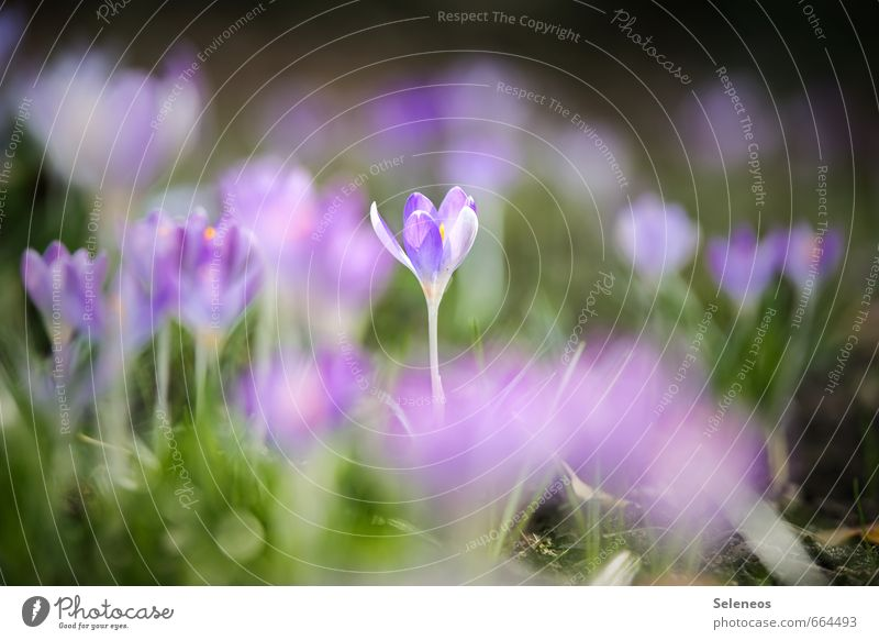 Nature Plant Relaxation Flower Calm Environment Meadow Grass Spring Blossom Natural Garden Park Beautiful weather Blossoming Delicate