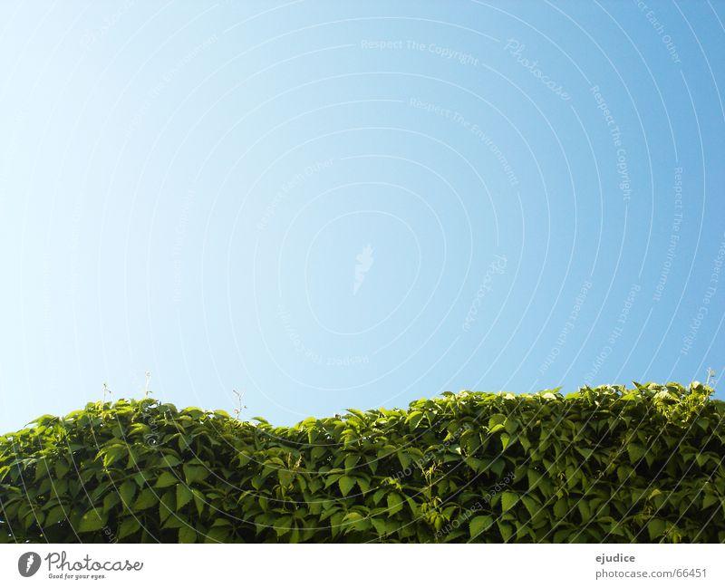 in.bush Bushes Green Hedge Leaf Nature Sky Blue