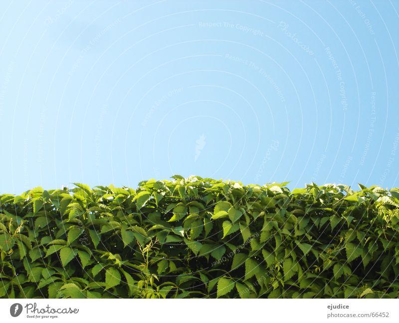 Nature Sky Green Blue Leaf Bushes Hedge