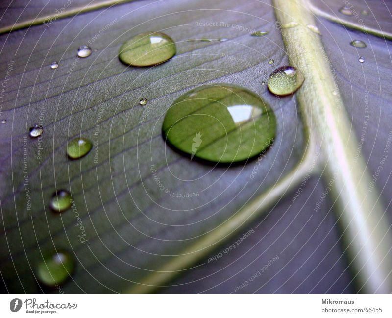 Nature Plant Blue Green Summer Water Tree Leaf Autumn Lighting Rain Drops of water Drinking water Wet Drop Stalk
