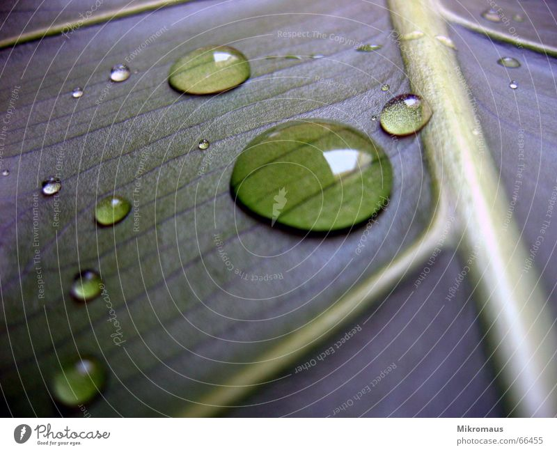 Nature Plant Blue Green Summer Water Tree Leaf Autumn Lighting Rain Drops of water Drinking water Wet Stalk
