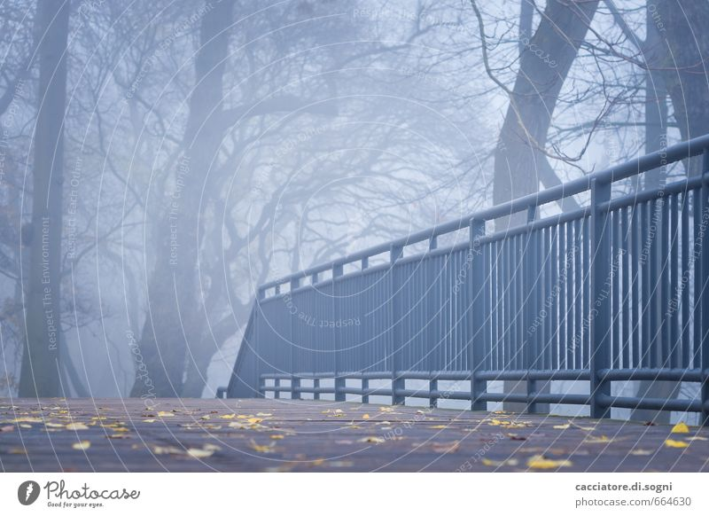 An autumn morning Environment Autumn Fog Park Bridge railing Lanes & trails Exceptional Threat Dark Creepy Cold Gloomy Blue Gray Black Boredom Sadness