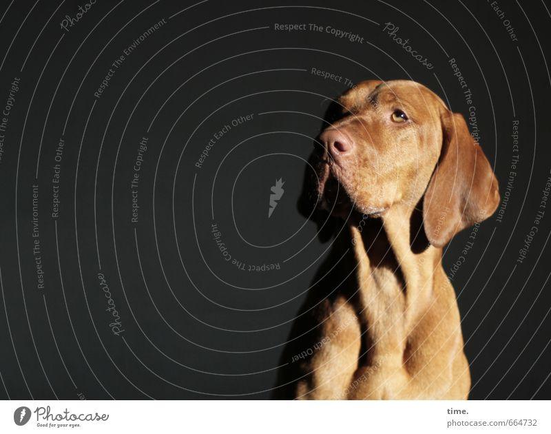 Dog Calm Animal Far-off places Natural Elegant Idyll Sit Esthetic To enjoy Observe Hope Pelt Concentrate Serene Animal face