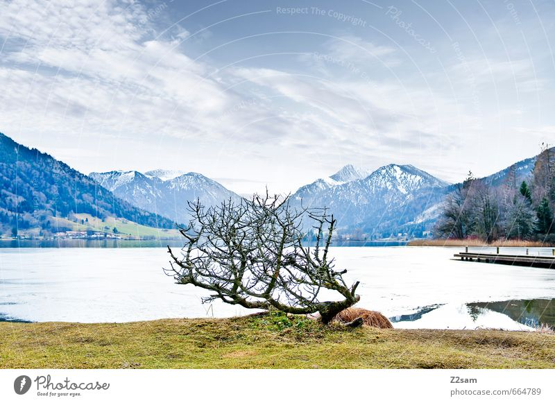 Schliersee Environment Nature Sky Clouds Winter Bushes Meadow Alps Mountain Lakeside Simple Cold Sustainability Natural Gloomy Blue Gray Loneliness Relaxation