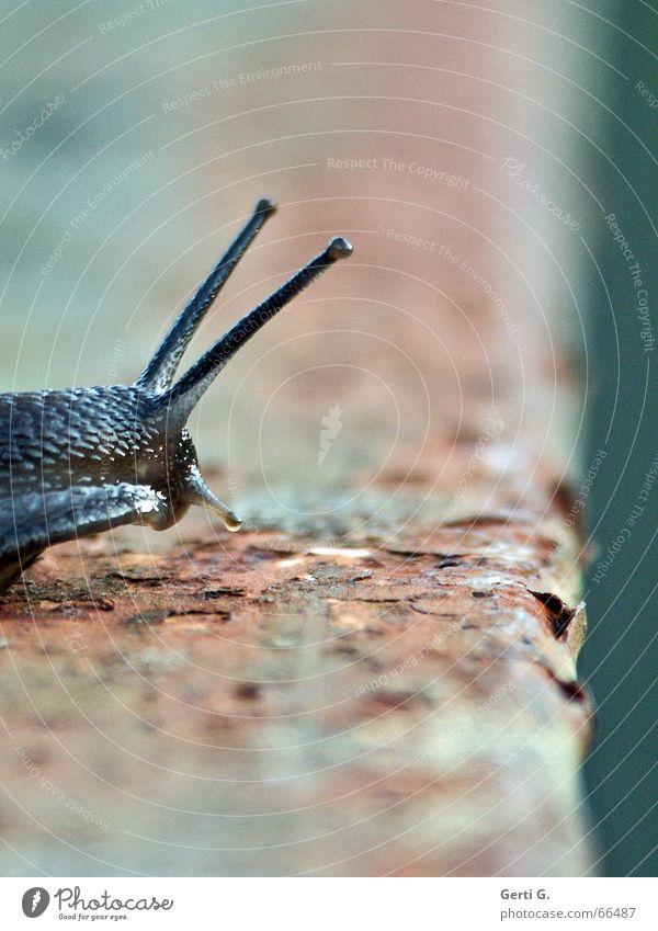 Speedy - the series Animal Snail shell Movement Crash Risk of collapse Bridge railing Derelict Edge Feeler Tentacle schnirkel snail Intoxication Rust foretaste