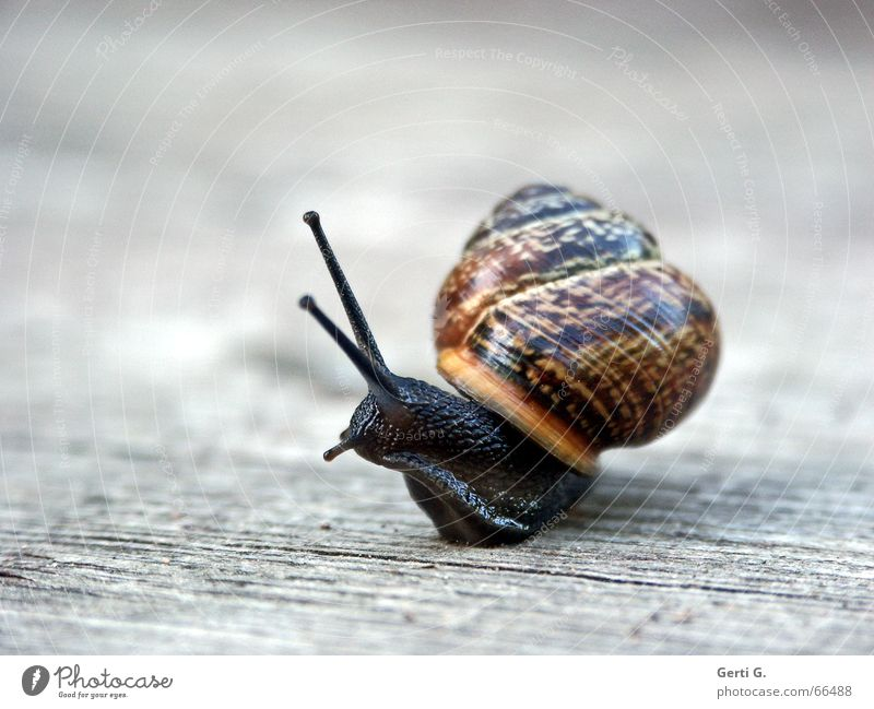 Animal Movement Wood Lanes & trails Glittering Speed Direction Rotate Intoxication Snail Feeler Reunification Rotation Wooden floor Transform