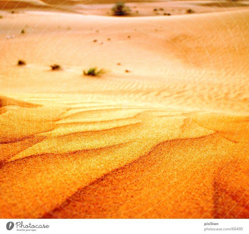 desert gold Dubai Bushes Sand Desert Beach dune Gold sunset Far-off places