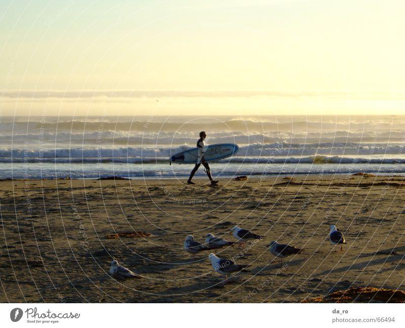 Man Ocean Beach Sports Bird Seagull Dusk Surfer Aquatics California Surfboard