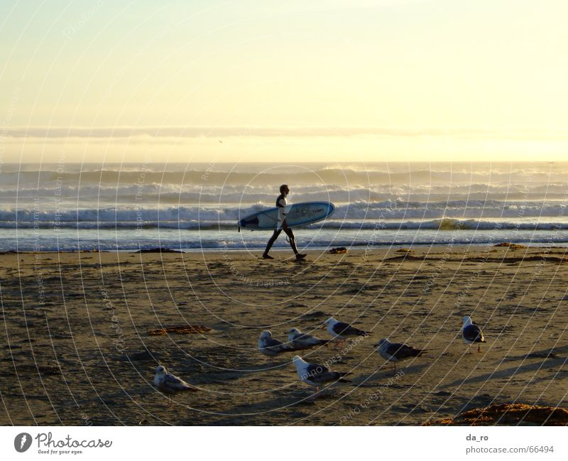 Man Ocean Beach Sports Bird Seagull Dusk Surfer Aquatics California Surfboard
