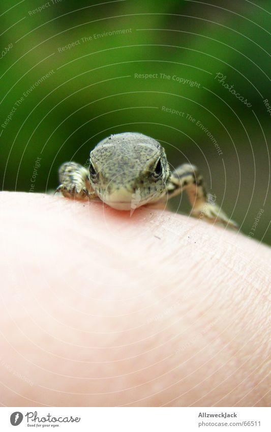 Nature Hand Green Animal Small Speed Cute Curiosity Reptiles Lizards Saurians
