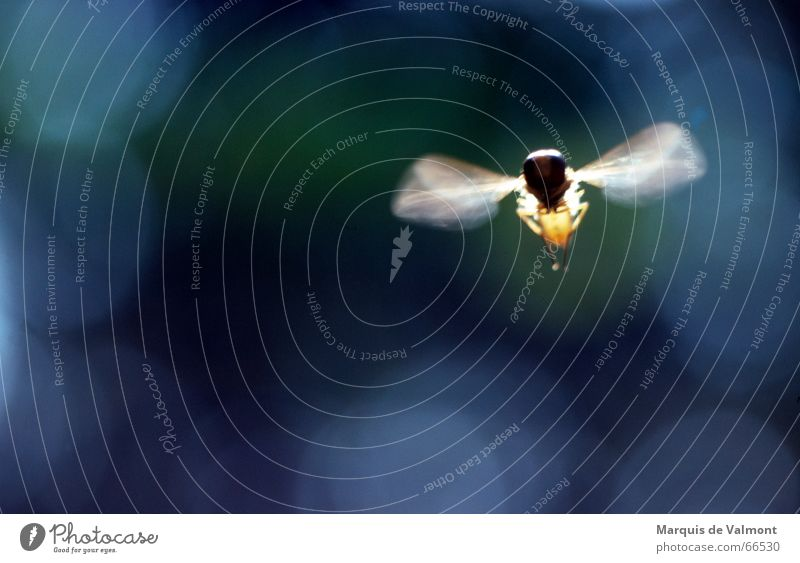 Movement Air Legs Fly Flying Aviation Wing Insect Analog Hover Lens flare Hover fly Patch of light