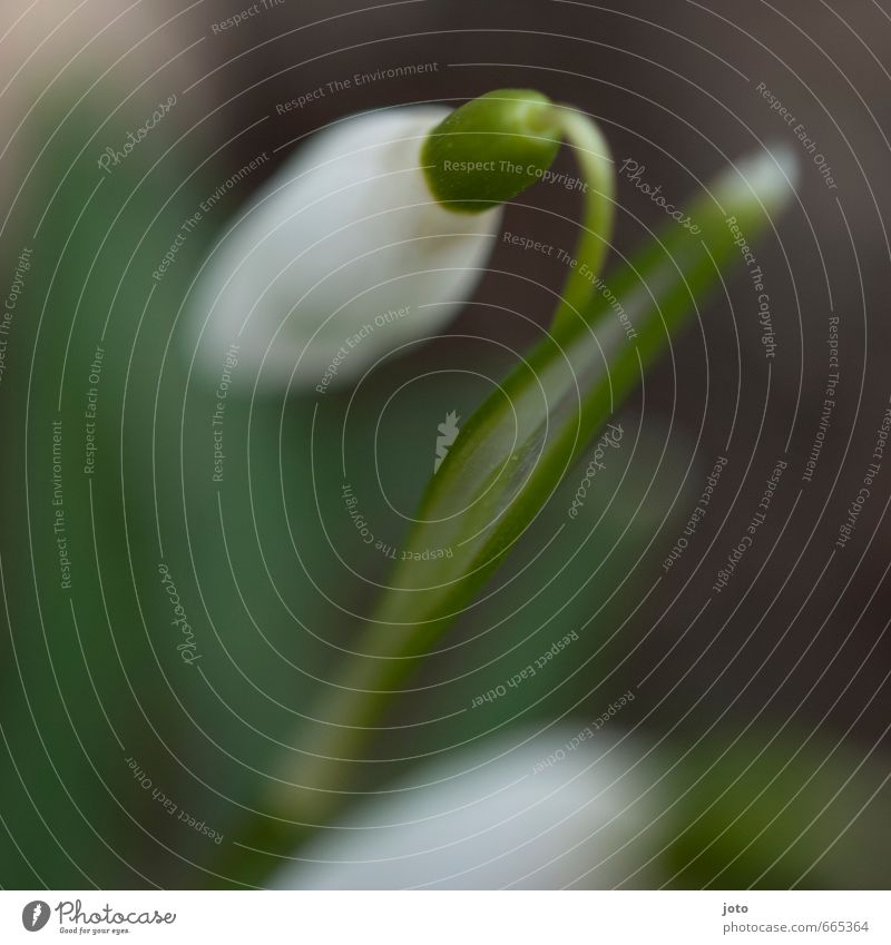 Nature Green White Plant Leaf Environment Life Meadow Spring Blossom Garden Park Idyll Growth Fresh Transience