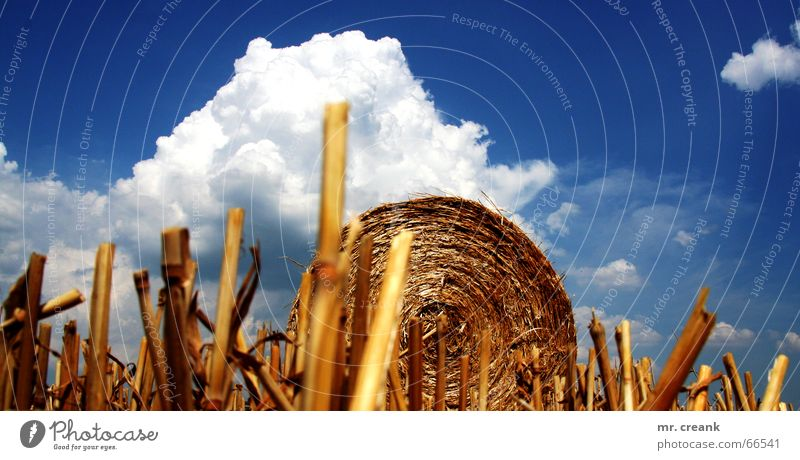 Nature Sky Clouds Autumn Field Ball Gastronomy Agriculture Americas Harvest Wheat Straw Barley Bale of straw