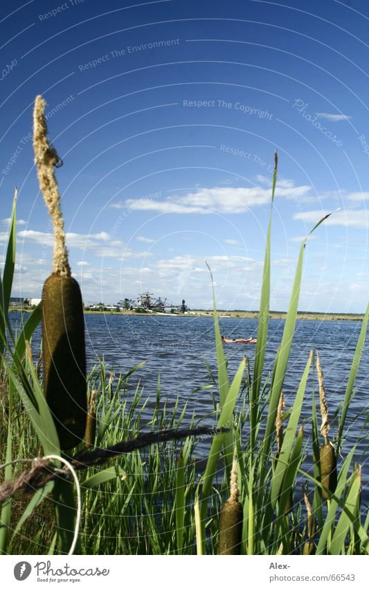 Water Sky Green Blue Plant Summer Joy Clouds Grass Lake Warmth Feasts & Celebrations Physics Swimming & Bathing Concert