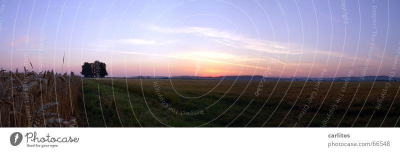 Blue Summer Horizon Back Large Panorama (Format) Sunrise Vapor trail Morning Human being Clump of trees Orange-red