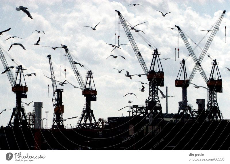fish market Crane Seagull Eerie Harbour Sky Hamburg Contrast