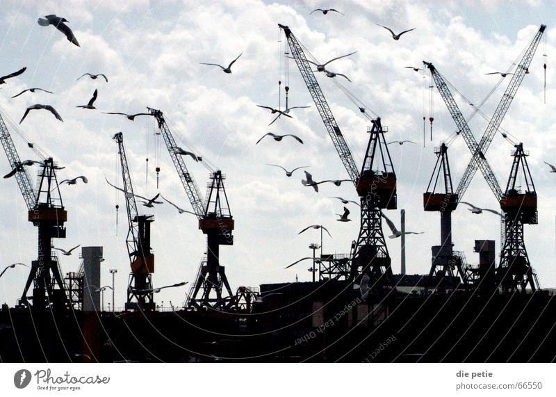 Sky Hamburg Harbour Seagull Crane Eerie
