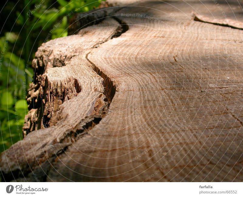 Tree Green Leaf Forest Wood Lanes & trails Brown Tree trunk Tree bark Shift work Multilayered