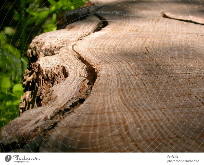 Tree Green Leaf Forest Wood Lanes & trails Brown Tree trunk Tree bark Shift work Multilayered