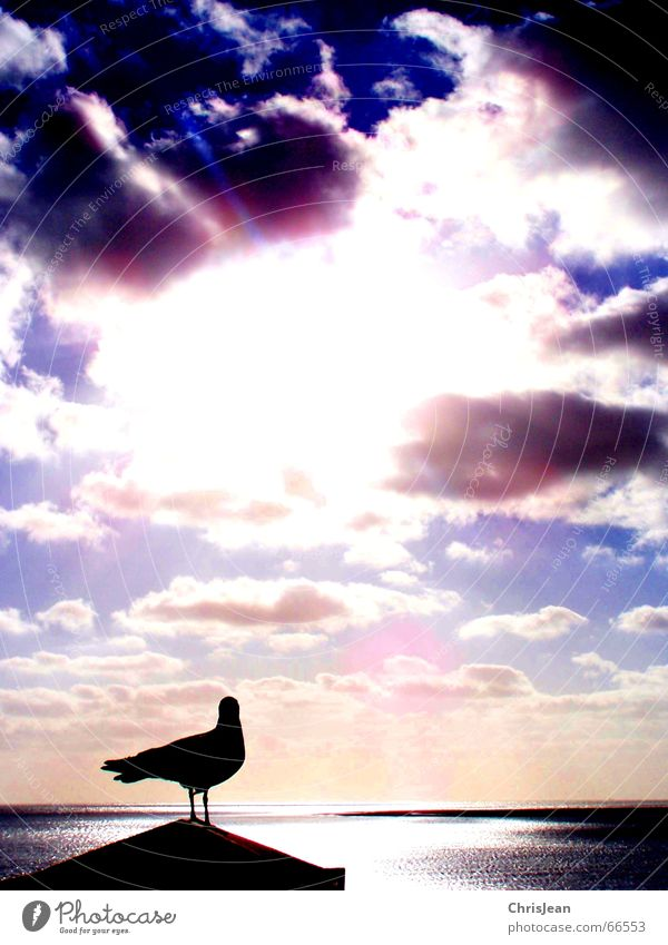Sky Sun Beach Ocean Clouds Loneliness Animal Relaxation Emotions Dream Lake Flying Island Sleep Clothing Stand