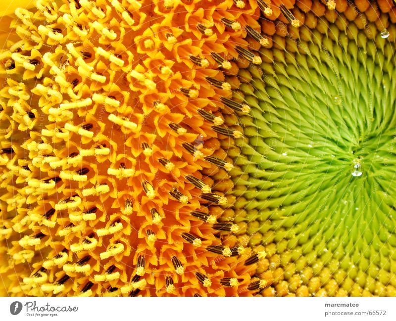 Flower Green Summer Yellow Warmth Orange Fresh Physics Sunflower Beautiful weather