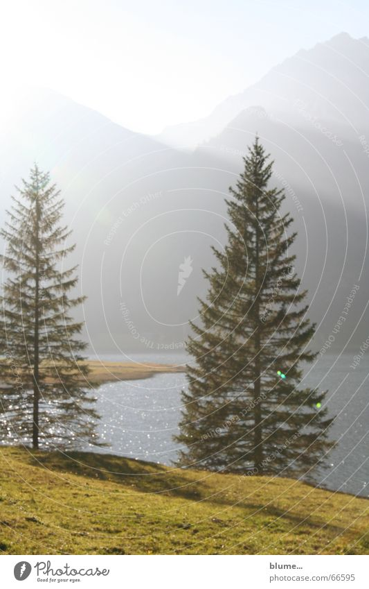 thannheimer valley Light Meadow Lake Dusk Bad weather Fir tree Coniferous trees Grass Body of water Shaft of light Hiking Tannheimer Valley Calm Relaxation