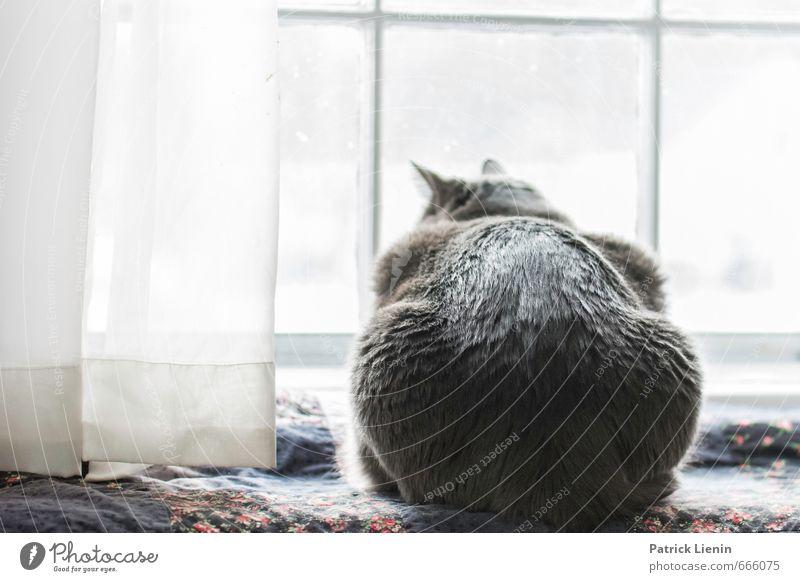 Cat Beautiful Relaxation Calm Animal Eroticism Environment Life Feminine Happy Lifestyle Elegant Contentment Cute Simple Soft