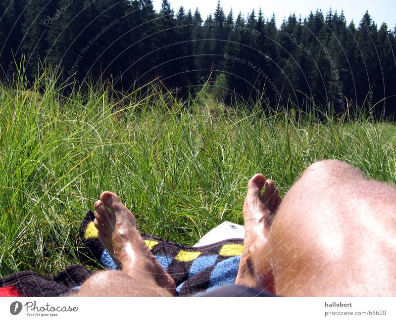 Sun Forest Meadow Legs Lawn for sunbathing Saxony Forest lake Vogtlandsee Lake