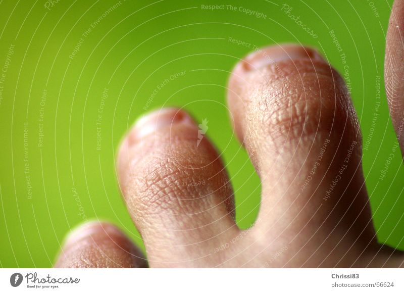 Old Animal Warmth Freedom Small Feet Walking Skin Arrangement Safety Round Soft Physics 5 Luxury Crack & Rip & Tear