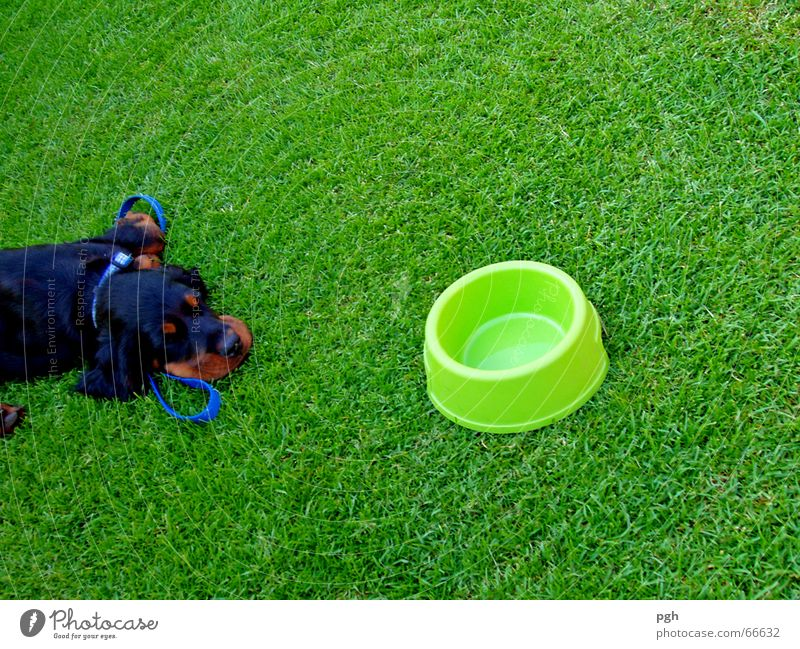 How am I supposed to find my water? Dog Black Brown Sleep Lunch hour Fatigue green meadow Thirst Exhaustion Food bowl