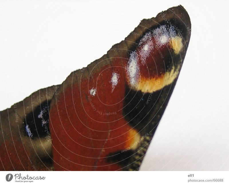 Nature Red Summer Yellow Brown Flying Butterfly Animal