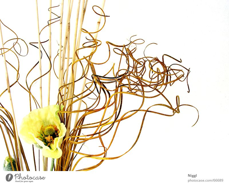 Plant Yellow Style Muddled Knot Placed Dried Flower Dried flower