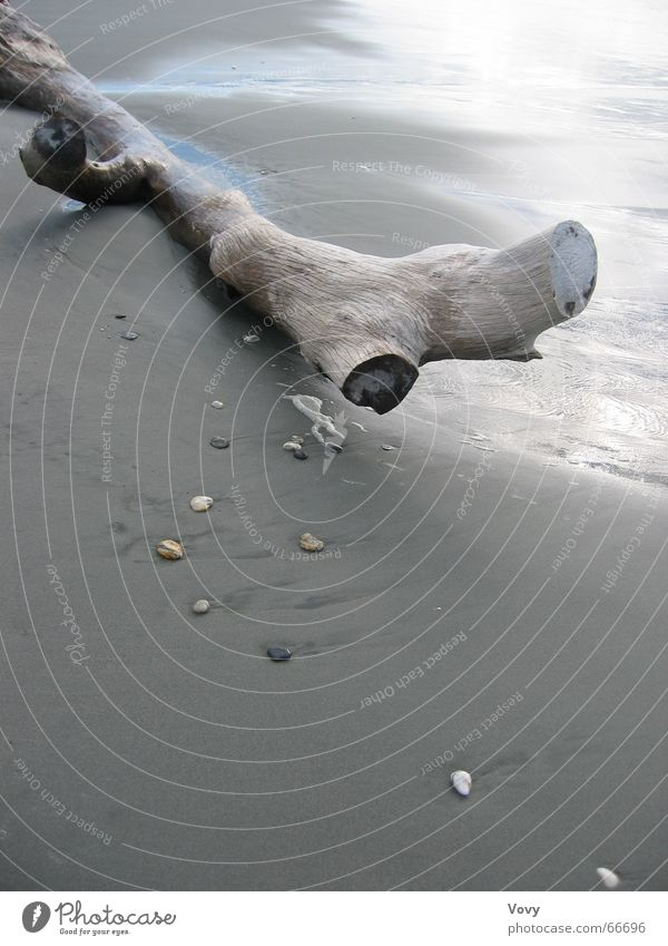 flotsam and jetsam Beach Tree trunk Ocean New Zealand Flotsam and jetsam Wood Sand Driftwood