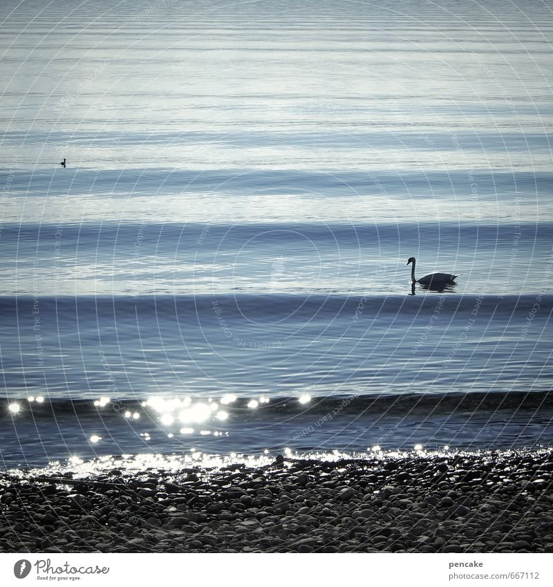 one wavelength Spring Beautiful weather Waves Lakeside Lake Constance Animal Swan 2 Water Sign Esthetic Soft Blue Wave length Glittering Pebble beach Stone