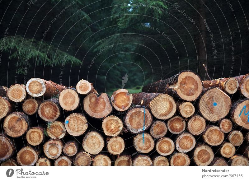 timber harvest Work and employment Profession Agriculture Forestry Plant Tree Wood Lack of inhibition Change pine wood round wood trunk wood felling
