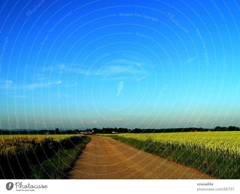 away to the blue Field Summer Wheat Rye Green Clouds Street Lanes & trails Grain grass Blue Sky