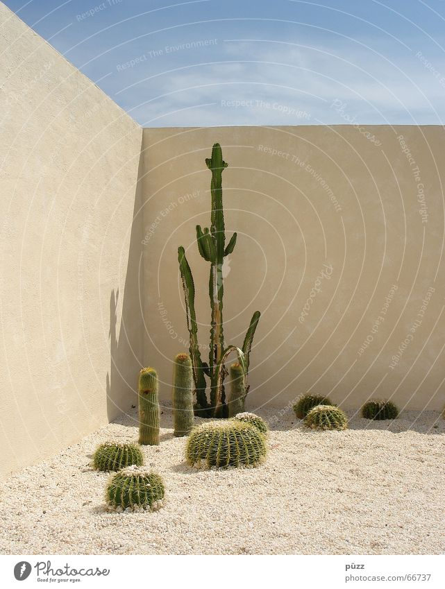 Green Blue Plant Summer Yellow Wall (building) Garden Wall (barrier) Warmth Sand Hot Mexico Cactus Thorny Leverkusen