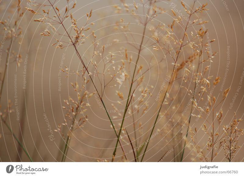 haze Grass Fog Beautiful Physics Soft Damp Light Yellow Blade of grass Blur Summer Calm Hissing Feeble panic Nature Pollen Warmth steamy Gold