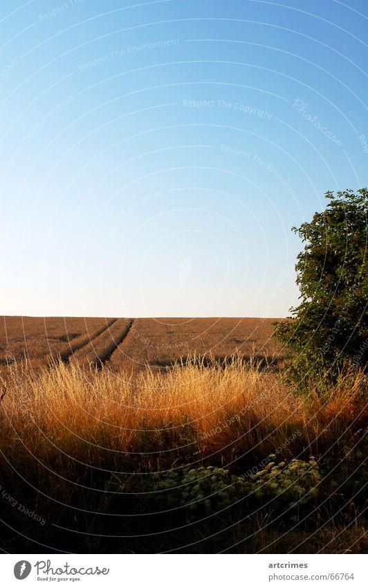 Sky Summer Landscape Horizon Grain Classic Triad