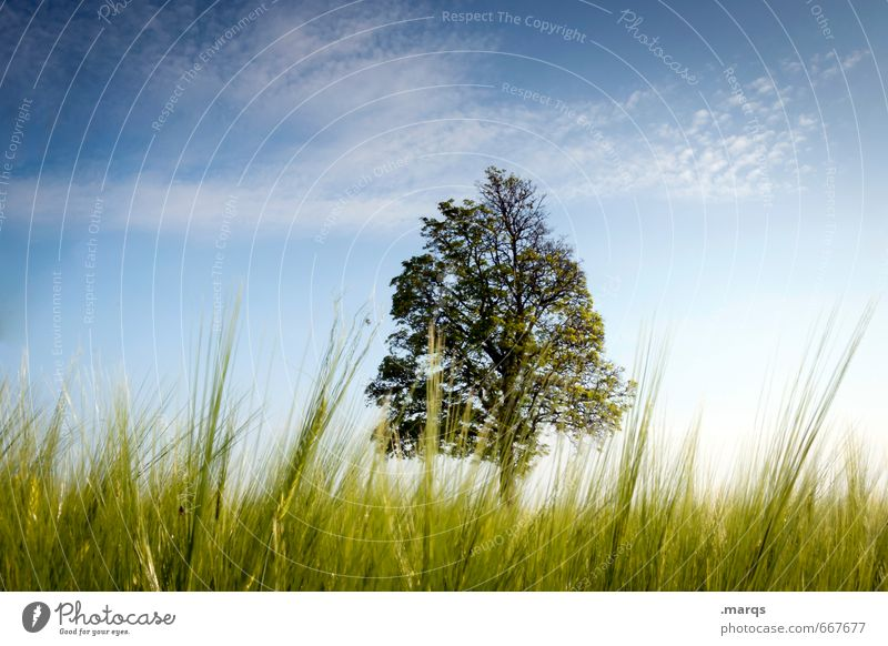 Sky Nature Beautiful Summer Tree Relaxation Landscape Environment Grass Natural Moody Idyll Perspective Trip Beautiful weather Deciduous tree