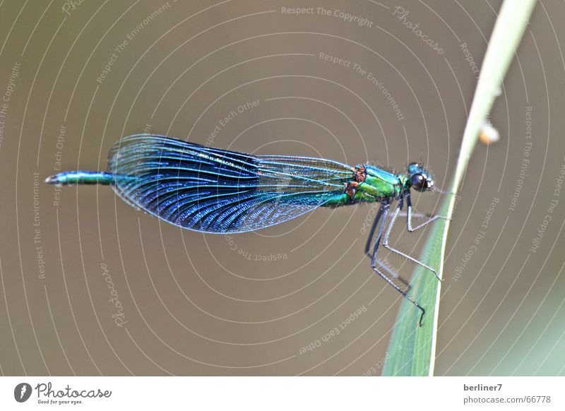 Nature Blue Summer Grass Lake Flying Blade of grass Dragonfly Insect