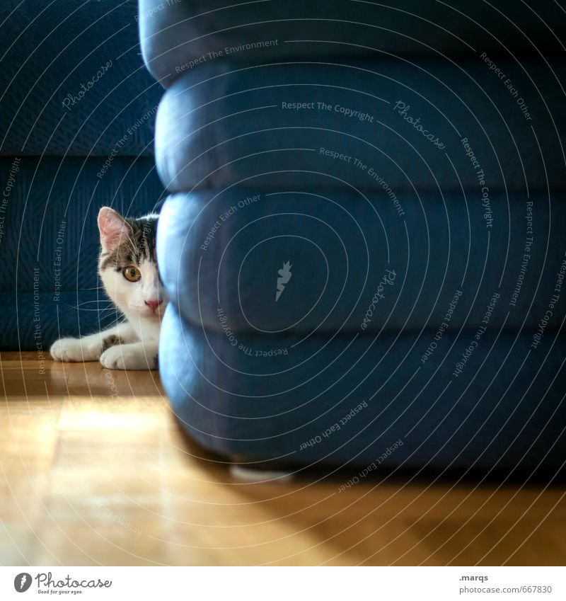 concealment Flat (apartment) Interior design Sofa Animal Cat 1 Baby animal Lie Looking Cute Expectation Watchfulness Hide Domestic cat Colour photo