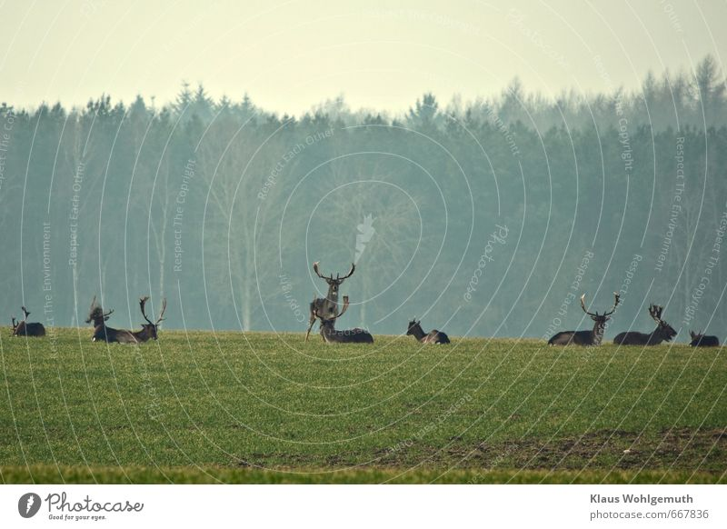 Nature Blue Green Plant Animal Environment Spring Gray Brown Horizon Lie Wild animal Group of animals Pelt Hunting To feed